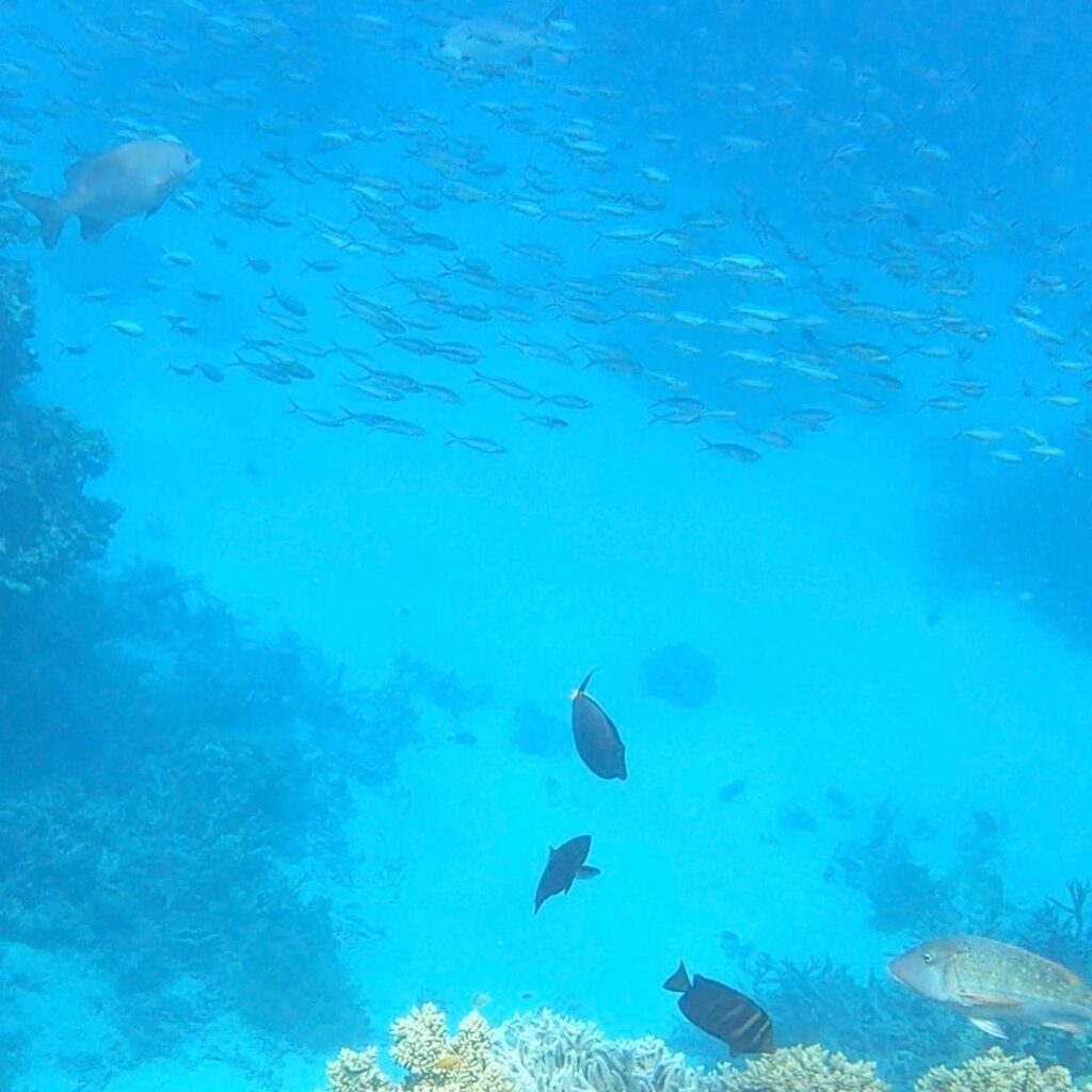 Great Barrier Reef Travel Tips