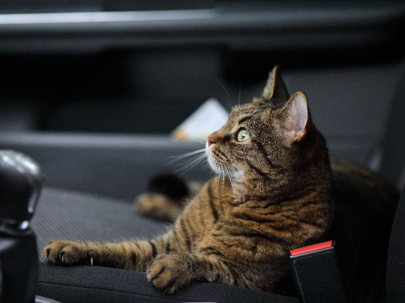 Cat Road Trip Tips