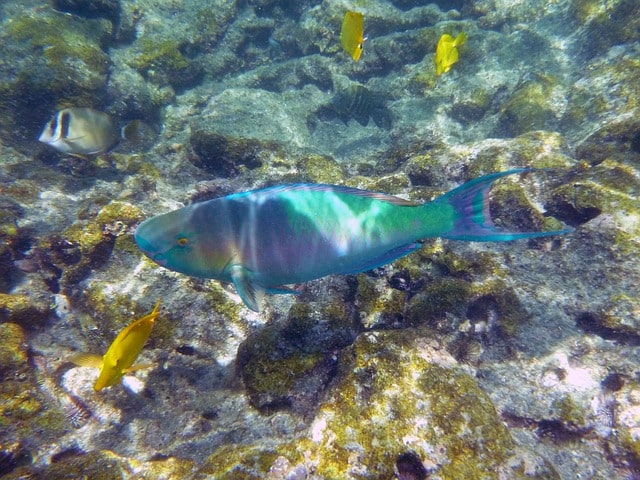 Hawaii Snorkeling