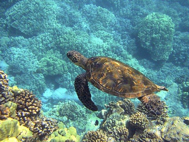 Hawaii Sealife