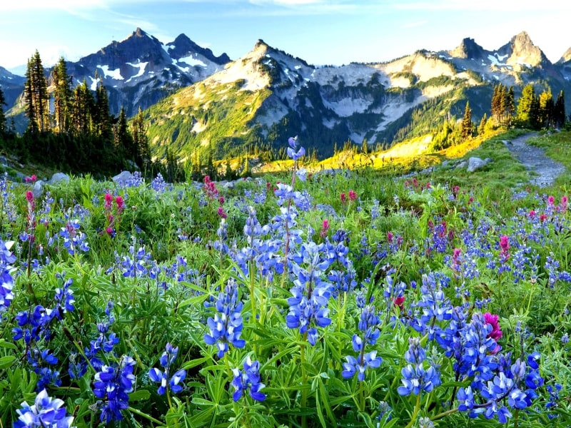 Sping Hiking Tips