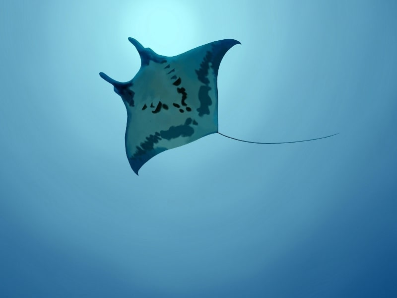 Australia Marine Wildlife
