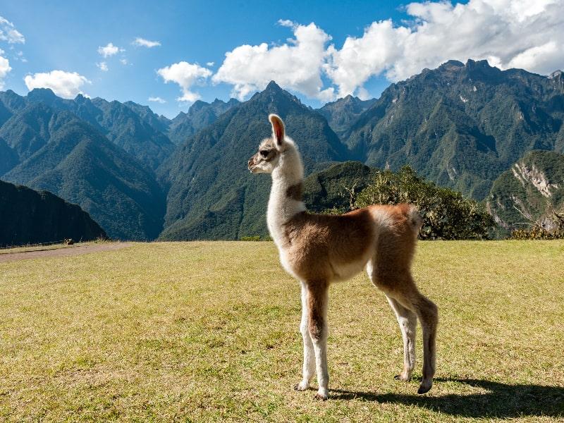 Peru Top Sites