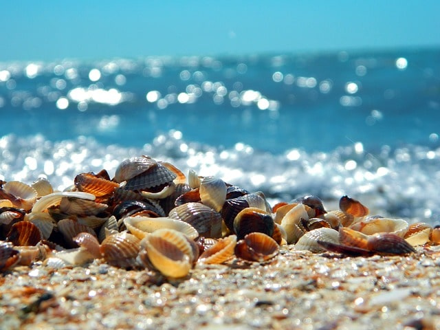 Seashells Ft. Myers Florida