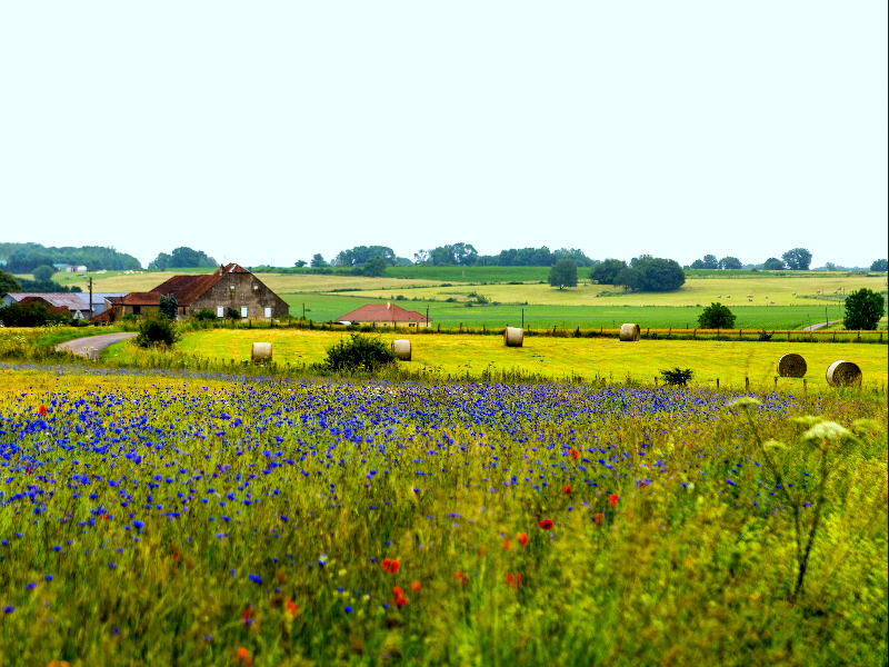 Champagne Region France