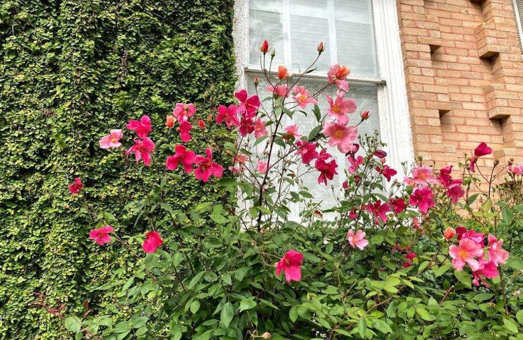 Abingdon Manor Gardens