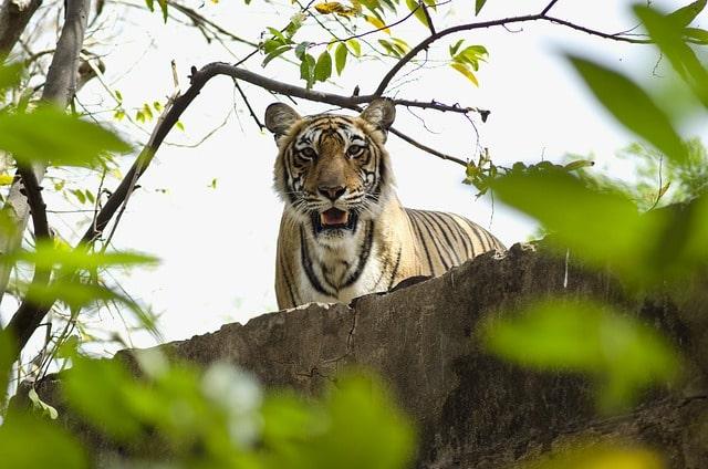 Tiger Reserve India