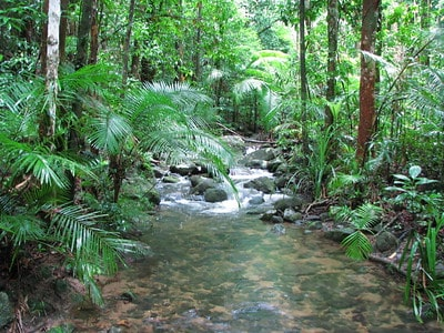 Mossman Gorge Daintree Rainforest