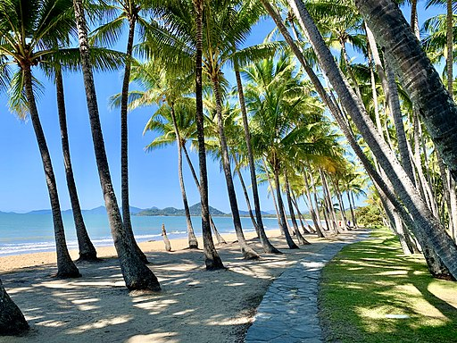 These 5 Attractions in Palm Cove Should Be on Your Bucket List