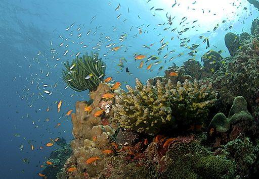 Andaman Islands Coral Reef