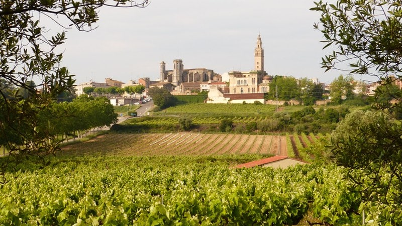 Penedès Wine Region Spain