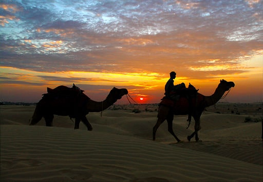 India Desert Safari