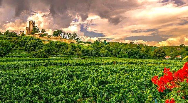 Spain Vineyard Trous