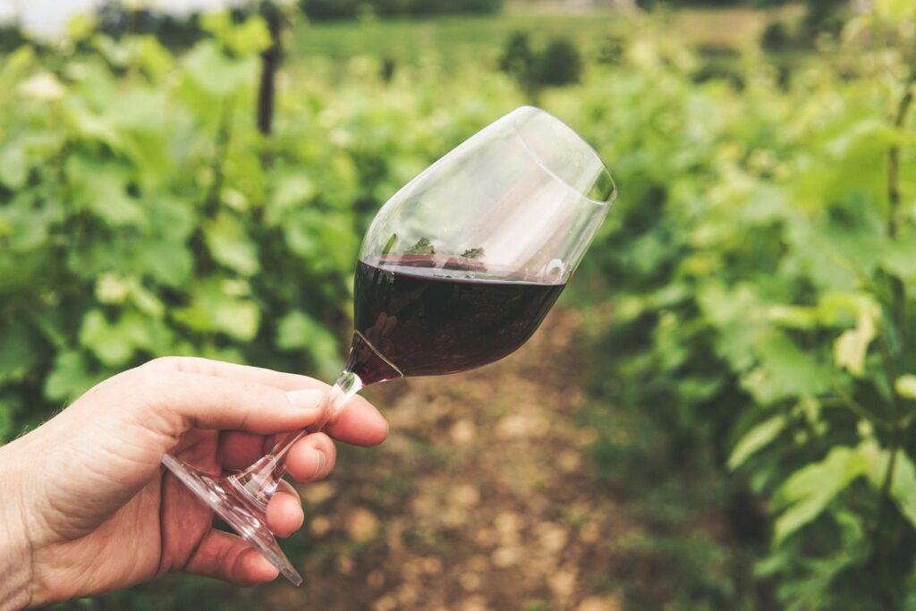 Spain Wine Tours